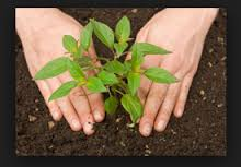 Picture_of_person_planting